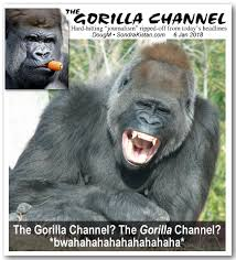 Gorilla Meme - gorilla channel new meme knowledge is power
