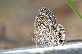 of fauna and flora in nature butterflies of lamma island
