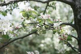 how to assess freeze damage to apple trees home guides