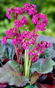 101 best ident plants images on pinterest garden plants flower
