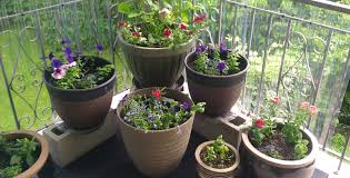 plant planters for plants beautiful indoor plants for planters