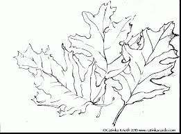 terrific fall leaves line drawing with fall leaves coloring pages