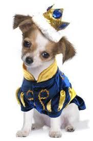 Dog Halloween Costumes 454 Dog Costumes Images Animals Pet Costumes