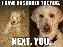 Shamwow Meme - shamwow dog funny pics memes captioned pictures