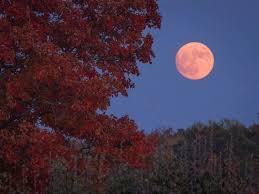 harvest moon to shine in carolina skies thursday wcnc com