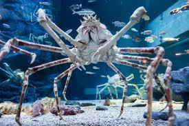 japanese aquarium why should i go to the osaka kaiyukan aquarium hub japan