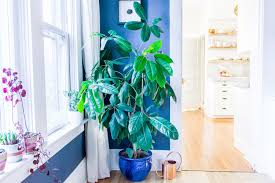 houseplants u0026 how to care for them apartment therapy