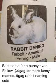 Funny Bunny Memes - rabbit deniro rabbit american young male best name for a bunny ever
