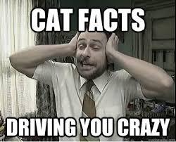 Cat Facts Meme - cat facts driving you crazy cat facts charlie quickmeme