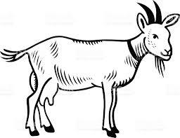 black and white illustration of a milking goat stock vector art