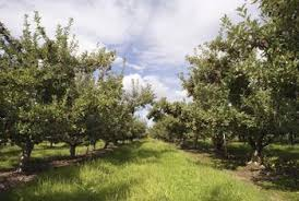 How To Keep Pests Away From Garden - the best ways to keep bugs away from fruit trees home guides