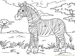 cool zebra coloring gallery kids ideas 2971 unknown