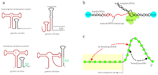 molecules free full text co transcriptional folding and