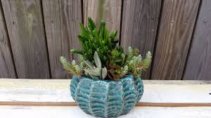 13 succulents that are native blog strawberry fields flowers u0026 finds