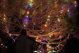christmas lights and christmas trees where to go in utah county