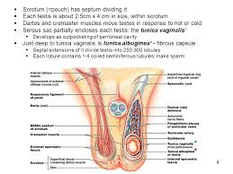 Anatomy Difference Between Male And Female The Reproductive System 2 Similarities And Differences Between