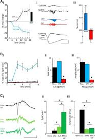 unbalanced peptidergic inhibition in superficial neocortex