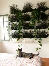 23 best inspiration for the green wall we want to make indoors