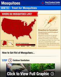How To Get Rid Of Mosquitoes In My Backyard How To Get Rid Of U0026 Kill Mosquitoes Mosquito Treatment