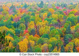 stock image fall colors algonquin park ontario canada