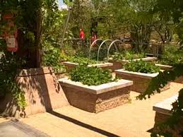 las vegas summer vegetable garden how to grow food in extreme