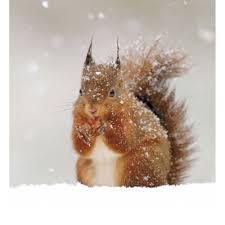squirrel in the snow cards dabcube