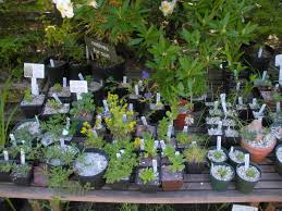 native plant nursery a visit to kruckeberg botanic garden msk rare plant nursery