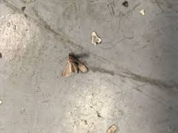 moths in kitchen cabinets how to get rid of moths a review of