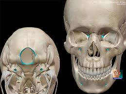 Base Of The Skull Anatomy Five Fast Facts About Skull Anatomy