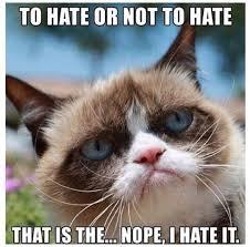 123 best grumpy cat images on pinterest funny kitties funny memes