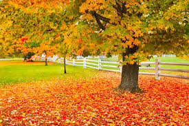 kinds of ornamental trees from to weeping types