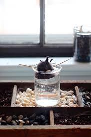 diy grow an indoor compost garden gardenista
