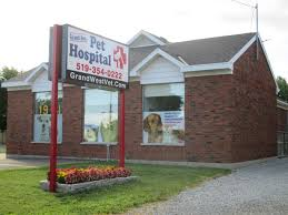 grand ave pet hospital veterinarian in chatham on canada home