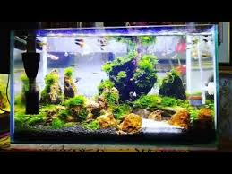 Aquascape Design Guppy Tank With Simple Moss Aquascape Design Youtube