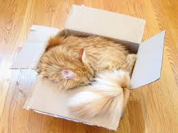 Why Does My Cat Sleep On My Bed What U0027s Up With That Why Do Cats Love Boxes So Much Wired