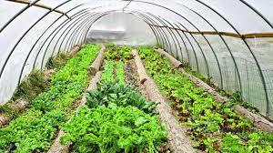 greenhouse for vegetable garden material maintenance cost other guidance for greenhouse gardening