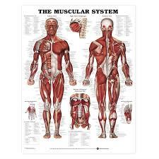 anatomy of yoga gallery learn human anatomy image