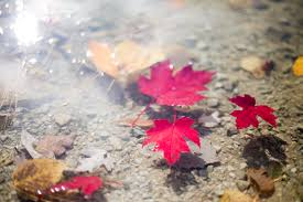 free images tree water nature plant leaf flower petal red