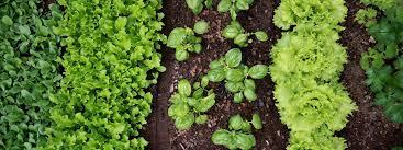 sustainable life ready veggie go hercanberra com au