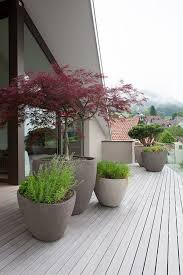 deck with potted trees plants decking gardens