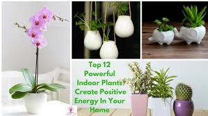 top 12 powerful indoor plants create positive energy in your home