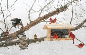 Bird In Backyard by How To Provide Seeds And Shelter For Backyard Birds All About Birds