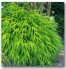 17 best grasses the like images on grasses