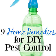 Home Tricks 9 Home Remedies For Diy Pest Control Graceful Little Honey Bee