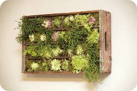 Indoor Herb Garden Kit Superb Indoor Herb Garden Kit Walmart Decorating Ideas Gallery In