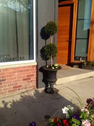 eugenia our new pet poodle tree storefront