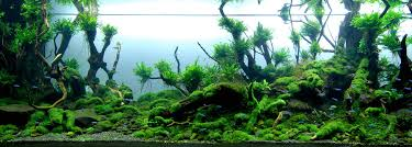 Aquascape Layout Beautifully Designed Aquariums Compete In The International