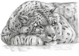snow tiger coloring page drawn snow leopard snow tiger many interesting cliparts