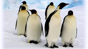 coloring pages of animals in their habitats emperor penguin