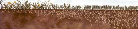 concimazione tappeto erboso prato cosa fare in autunno perch礬 sia forte e sano landscaper pro